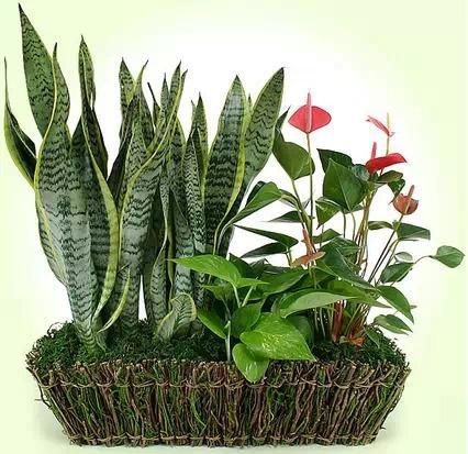 放上这几种植物,轻松去除卫生间异味!